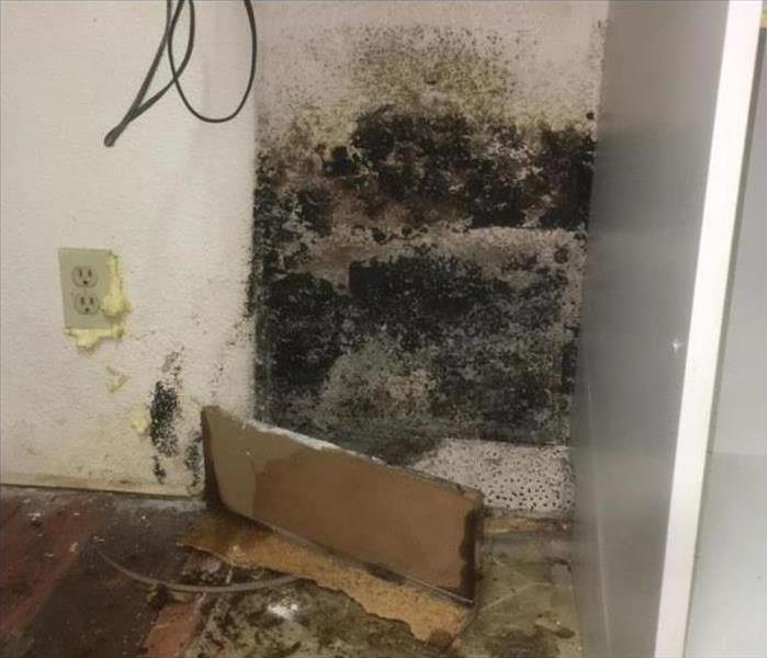 Mold on the corner of two walls.